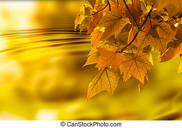 Autumn leaf background - Orange autumn orange color...