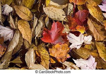 Autumn Leaf Background Texture