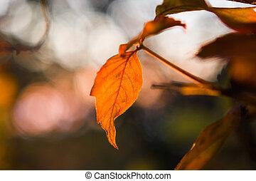 Autumn Leaf Backlit by the Sun