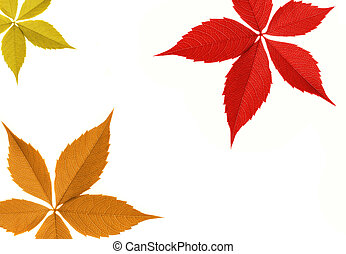 Autumn leaf border