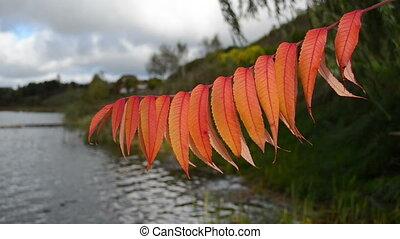 autumn leaf closeup lake
