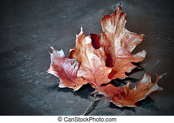 Autumn Leaf Cluster