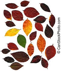 Autumn Leaf Collection XX
