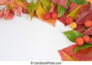 Autumn leaf composition