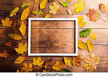 Autumn leaf composition.