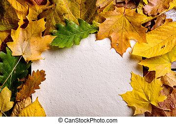 Autumn leaf composition, paper sheet. Studio shot.