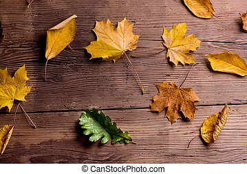 Autumn leaf composition. Studio shot on wooden background.