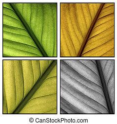 Autumn leaf details