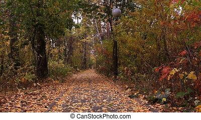 Autumn leaf fall. - Autumn leaf fall. Burabay (Borovoe),...