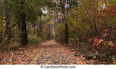 Autumn leaf fall.  Burabay (Borovoe), Kazakhstan.