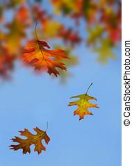 Autumn. Leaf fall.