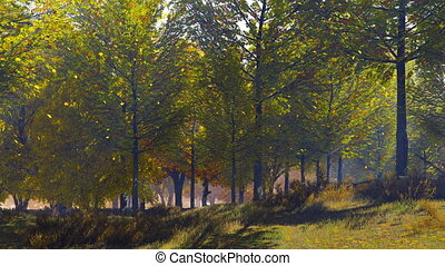 Autumn leaf fall in deciduous forest at sunny day - Autumn...