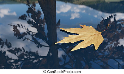 Autumn leaf floating on the water