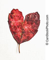 Autumn leaf heart shape