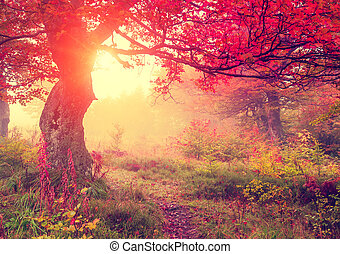 Majestic autumn trees in forest glowing by sunlight. Red autumn leaves. Dramatic morning scene. Carpathian, Ukraine, Europe. Beauty world. Retro style filter. Instagram toning effect.
