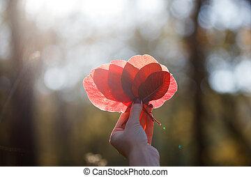 autumn leaf in hand on the sun
