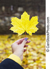 Autumn leaf in hand
