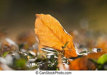autumn leaf in nature