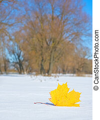 Autumn leaf in the snow in the winter