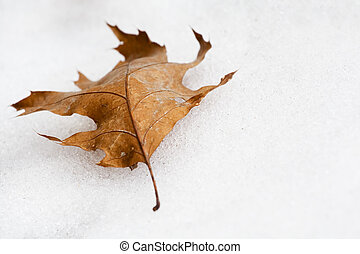 Autumn leaf in the snow