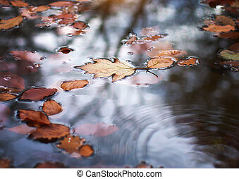 Autumn leaf in water.