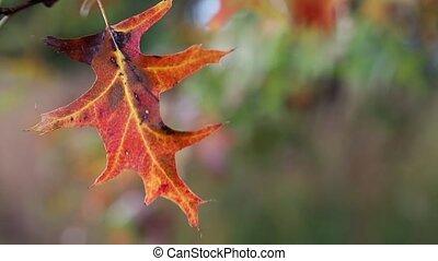 Autumn Leaf Loop