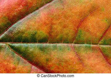 autumn leaf macro #5