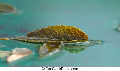 autumn leaf of tree lying in the water nature macro