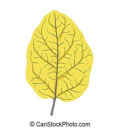 Autumn leaf of tree, vector illustration