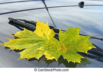 autumn leaf on a car windshield