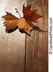 Autumn Leaf on a park bench