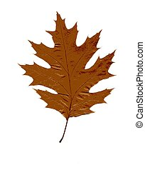 Autumn leaf on a white background