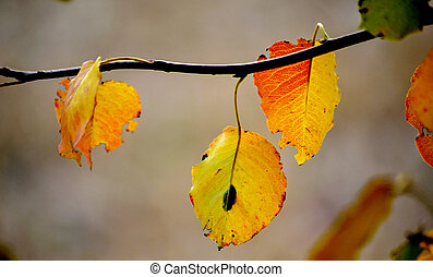 autumn leaf on blur background, season concept