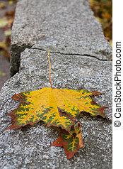 autumn leaf on granite stone