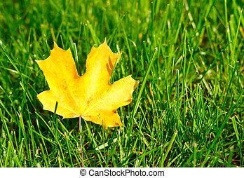 Autumn leaf on green grass.