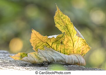 autumn leaf on meadow