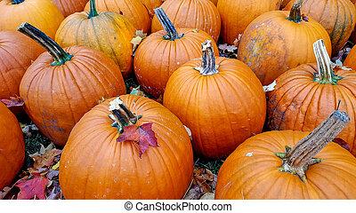 autumn leaf on pumpkin