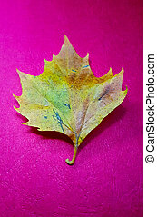 autumn leaf on red background, season concept