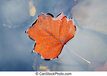 Autumn leaf on water