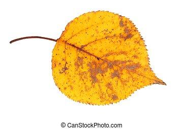 Autumn leaf on white