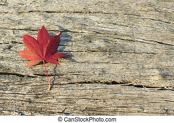 Autumn leaf on wood with copy space