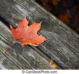 Autumn leaf on wooden bench at park