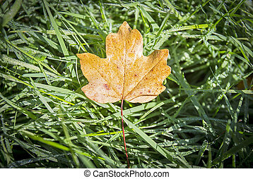 Autumn leaf over grass in the forest