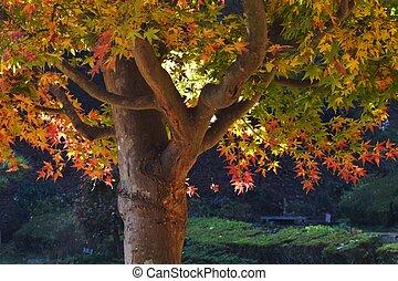 Autumn leaf season in Japan
