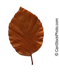 Autumn Leaf
