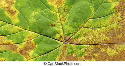 Autumn leaf texture background
