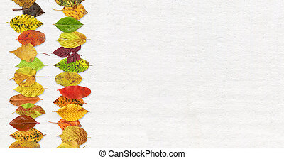 Autumn leaf texture background on a white background