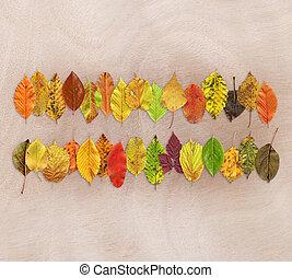 Autumn leaf texture background on wooden background