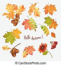 Autumn leaf vector collection