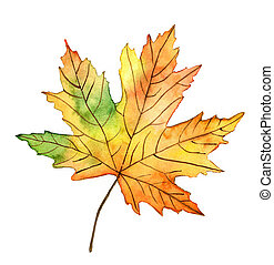 Autumn leaf watercolor illustration on white background